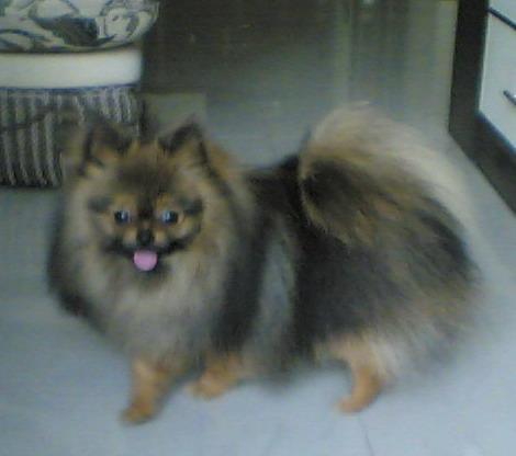 狗之快乐 - yuleiblog - 俞雷的博客