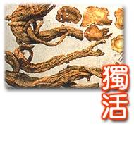 一個中醫藥保健的网站 - 陳猫 - 猫公館